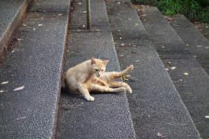 感じの悪い猫