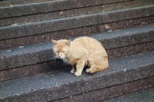憎めない猫