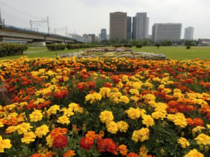 A beautiful flower bed in Japan