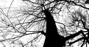 怖い雰囲気の公園と木