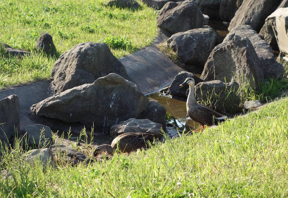 Birds in a seaside park in Chiba