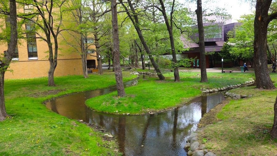 北海道大学の広くて綺麗な庭