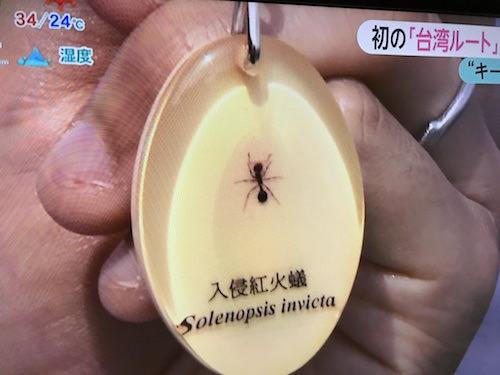 ヒアリキーホルダーは本物の火蟻が中に入っている。