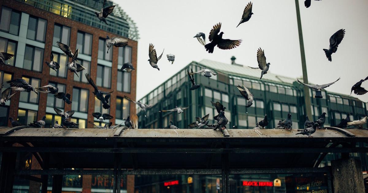 オウム病に要注意、飼っている鳥や外にいるハトなどのフンの細菌で病気に感染する。