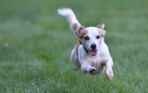 犬を連写しても綺麗な写真が残せるSDメモリーカード