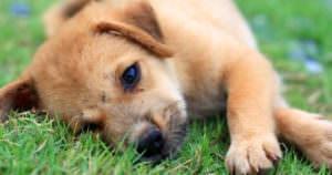 可愛い子犬