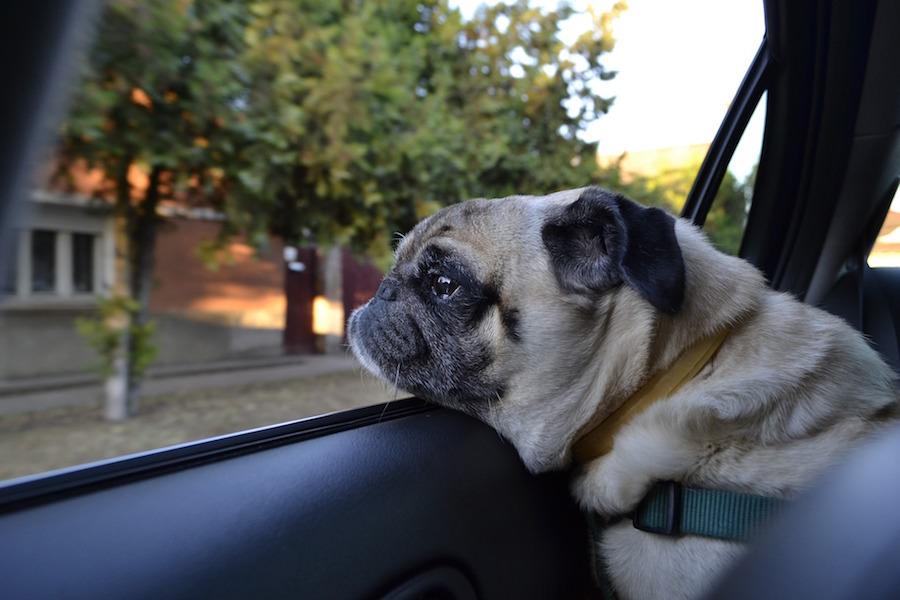犬と車で旅行した時、絶対に一人で車に置き去りにしないようにしよう