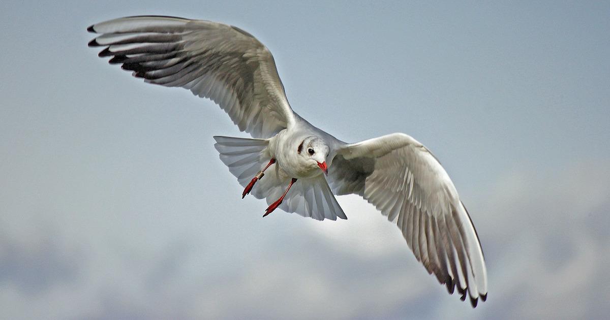 航空機に鳥がぶつかる恐ろしいバードストライクの破壊力。機体のエンジンを停止させたり、出火の可能性も