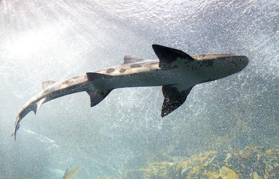 「ハイ」はフィンランド語でサメという意味