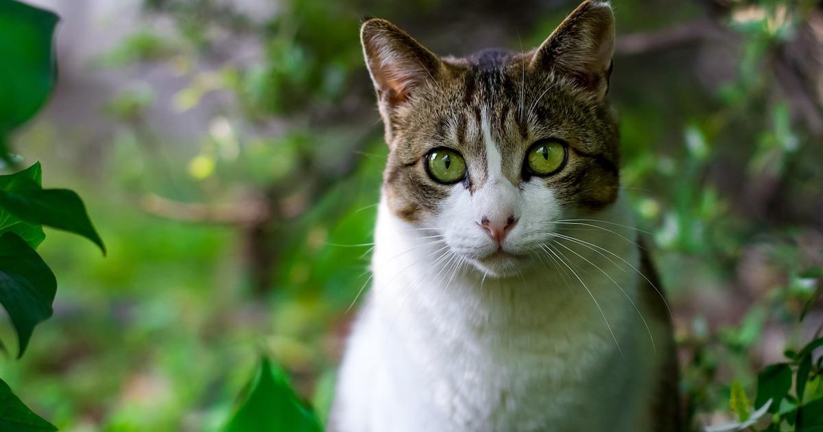 マダニに噛まれたノラ猫で女性が噛まれ死亡