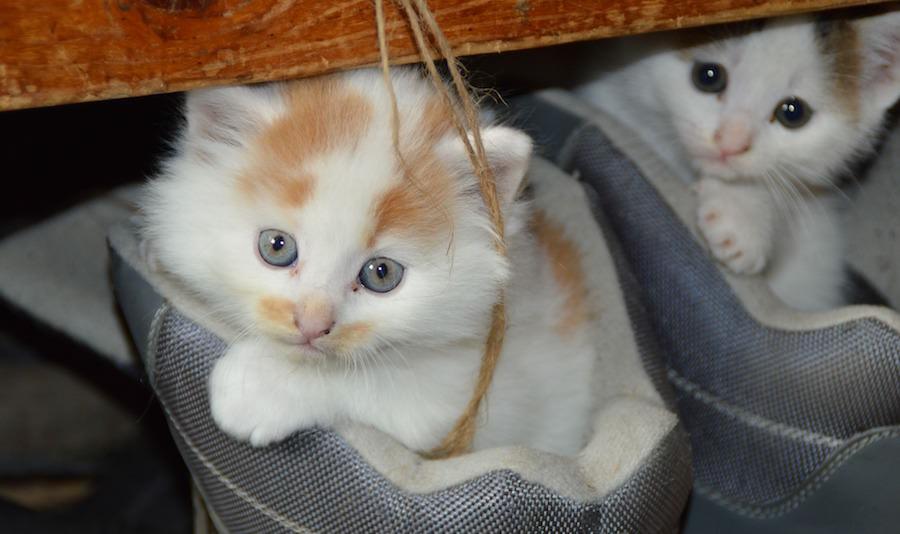 人間の身勝手さが猫に悲劇を与える。