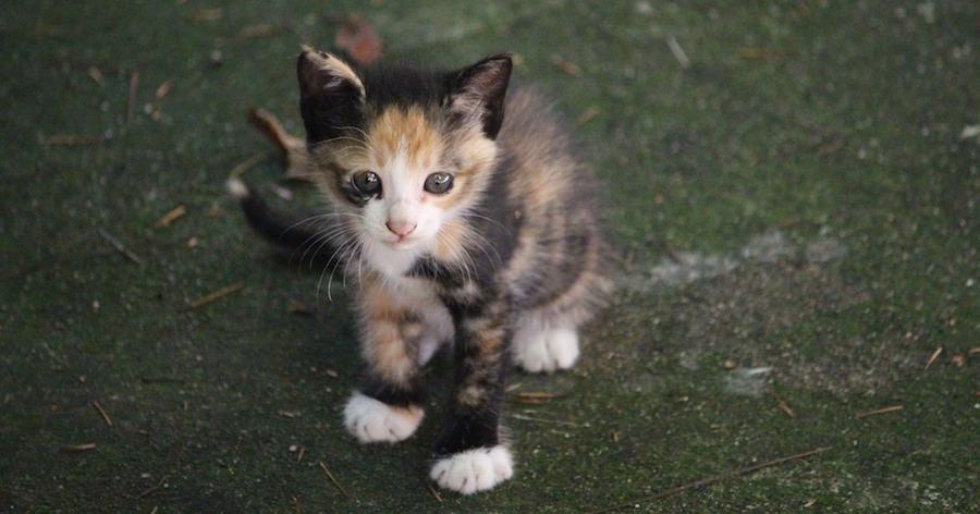 捨てられた猫は悲しそうに見つめている。